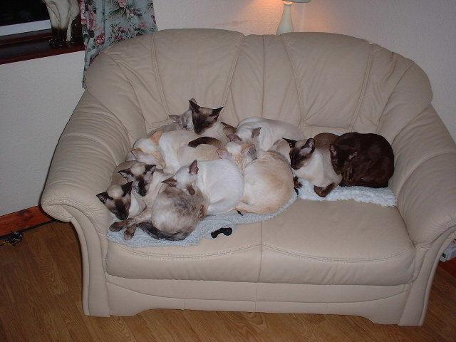 sofa full!!!!!